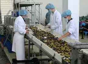 Sorting blue plum
